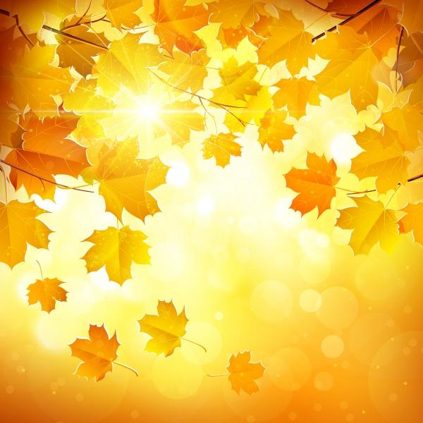 Желтые осенние баннеры и фоны (30 файлов)