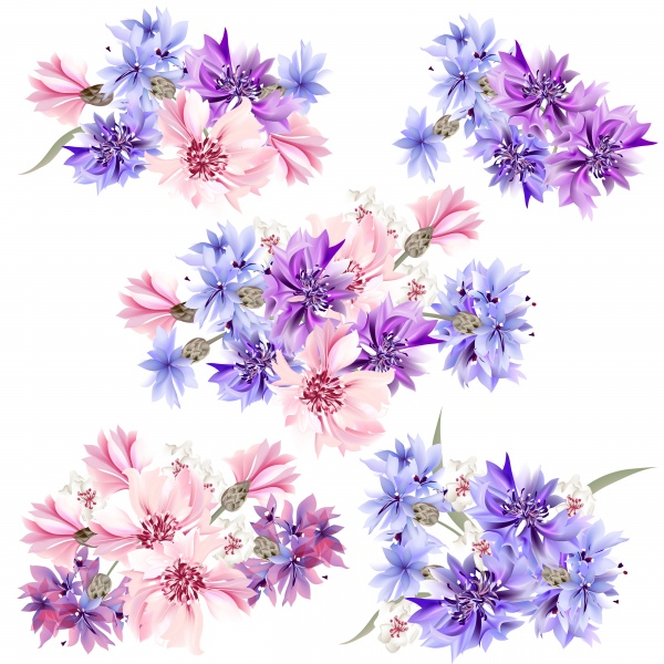 Floral clear background blue, pink and purple cornflowers (20 файлов)