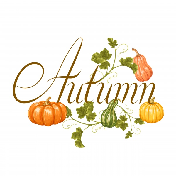 Autumn background with pumpkins, decorative illustration from vegetables and leaves (20 файлов)